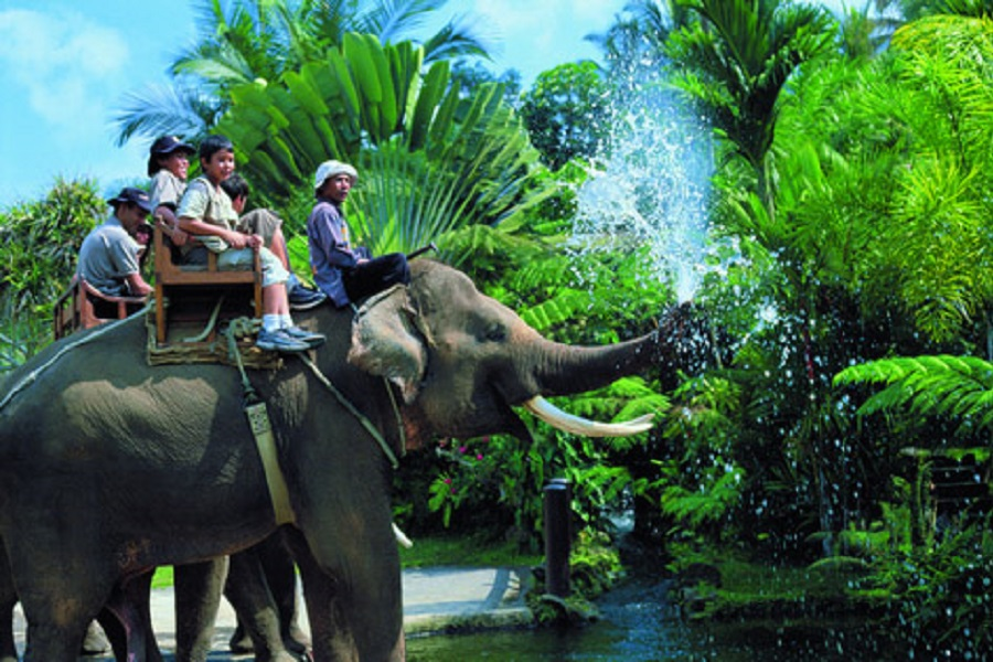 Safari Tour + Elephant Trekking + Shooting + Elephant & Monkey Show