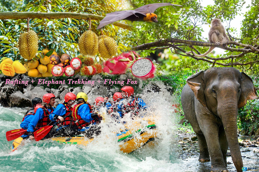 Rafting + Elephant Trekking + Flying Fox